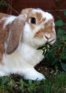 Ginger, September 2009