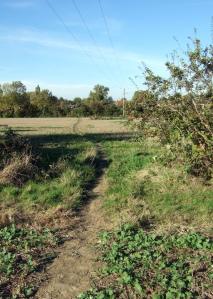 Walking through meadow