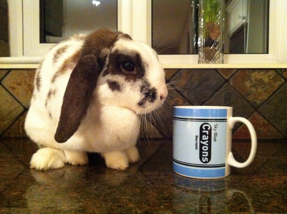 Instagram - Chocolate and a Mug