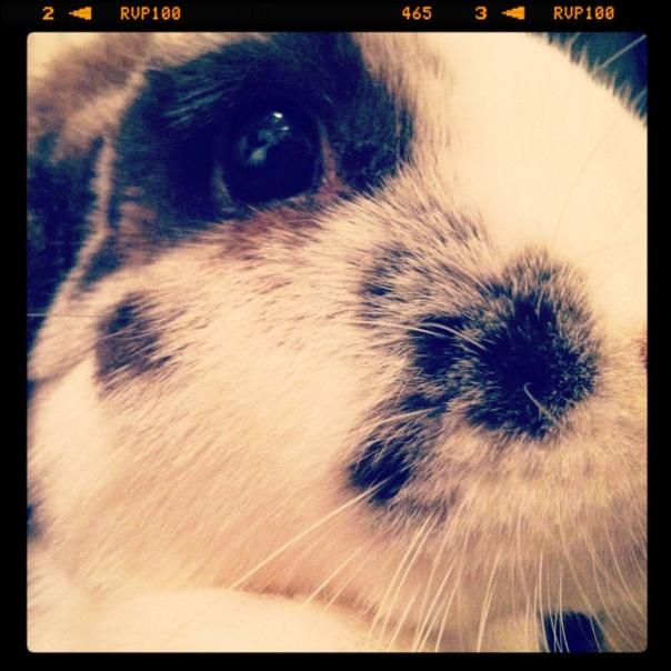 Instagram - Chocolate close up face shot